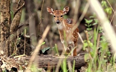 Wayanad Tour Packages from Hyderabad
