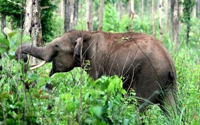 Are You Looking for Affordable Kochi to Wayanad Tour Package?