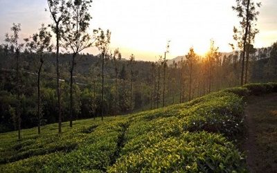 Are You Looking to Pre-book a Customized Tour In Wayanad by Exclusive Cab?